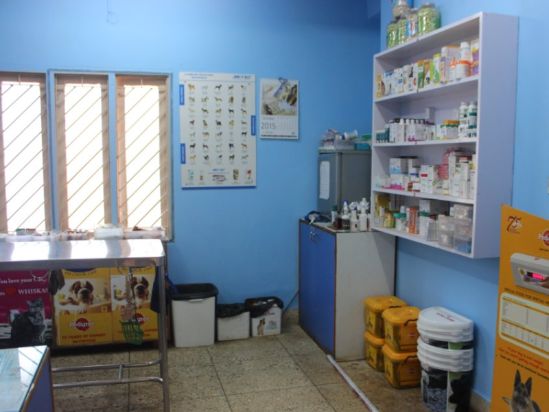 Pet Clinic in HSR