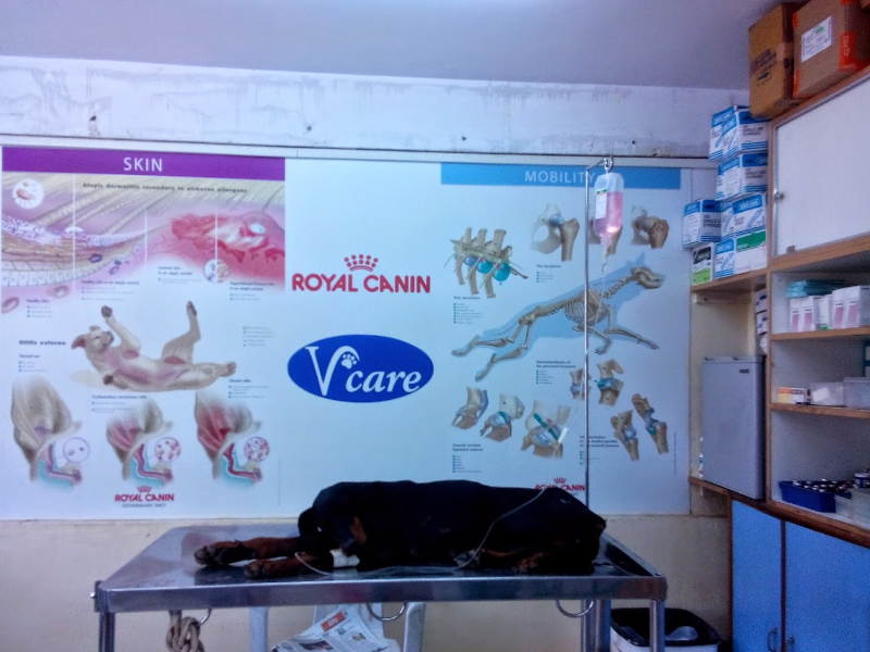 Pet Shop in Sarjapura Bangalore
